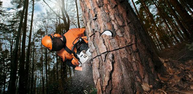 Спилить дерево целиком