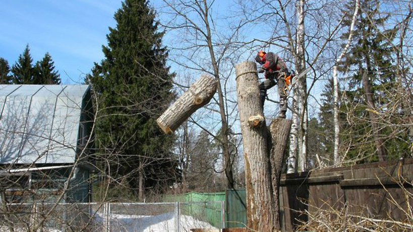 Спилить дерево по частям